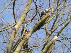 Fracture training with TreeWorks May 04