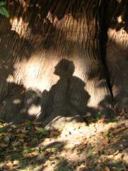 David Lonsdale at Greenwich ATF, reflections on a veteran Sweet Chestnut Oct 09