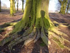 Checking out a Beech with Michele pfeiffer