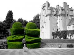 Yew - Crathes Castle '09
