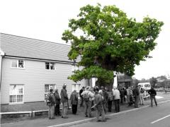 Oak - Staverton '10