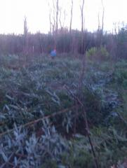SITKA AND RHOADY CLEARANCE