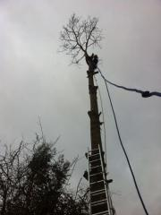 Work Completed by SPC Tree Services