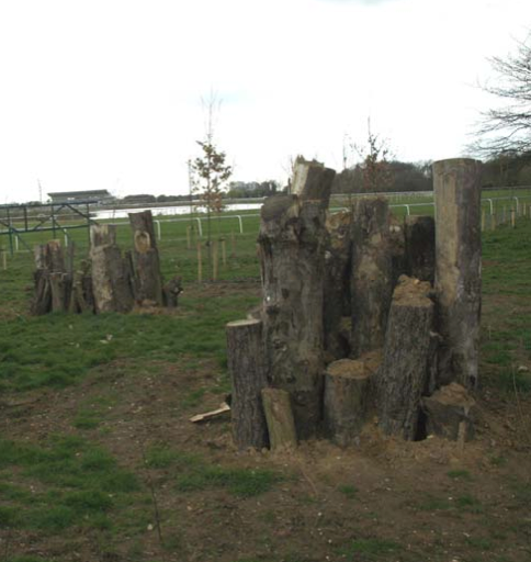 Stag beetle wood piles