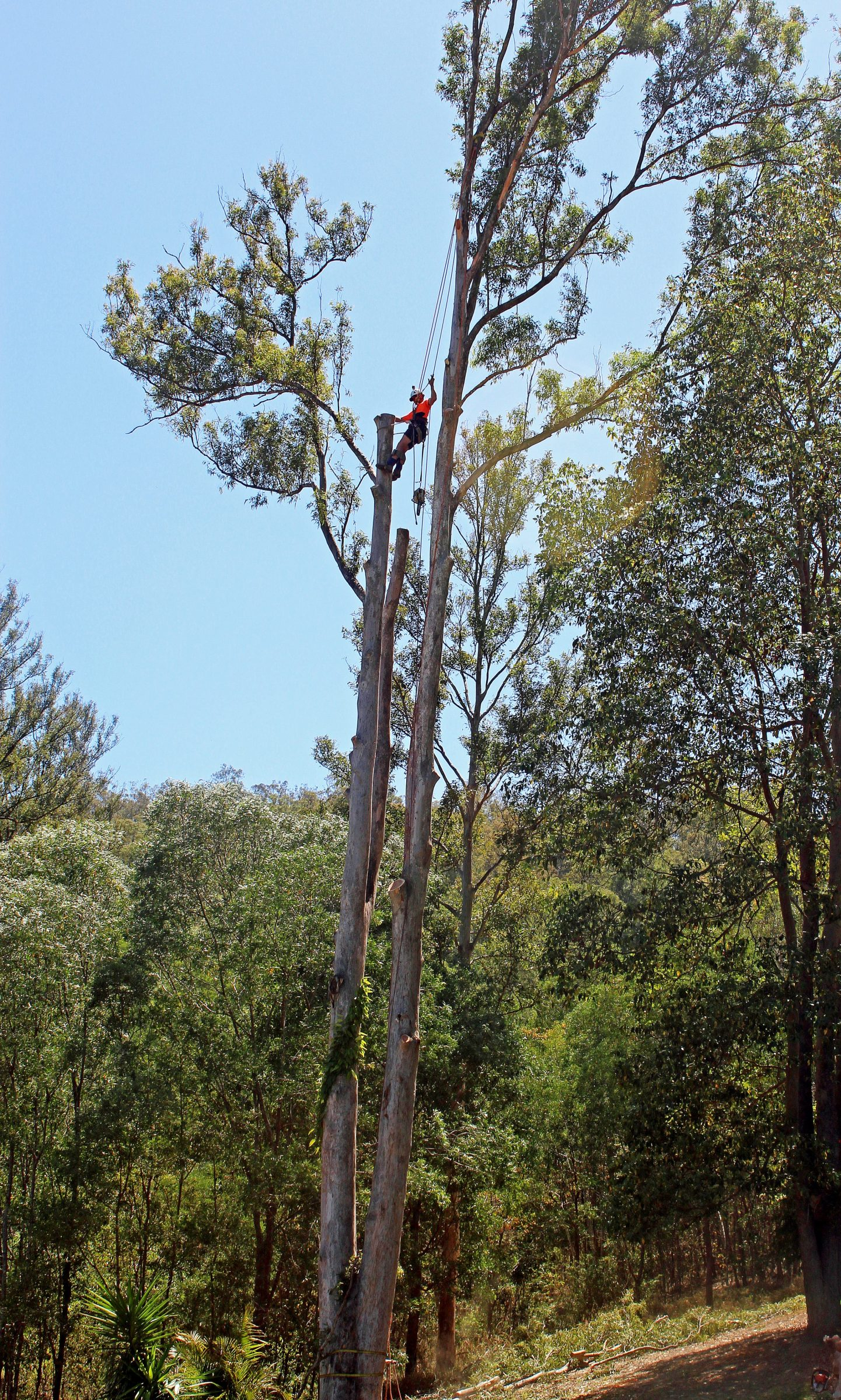 Tree work, Australia, Melbourne, We need YOU!