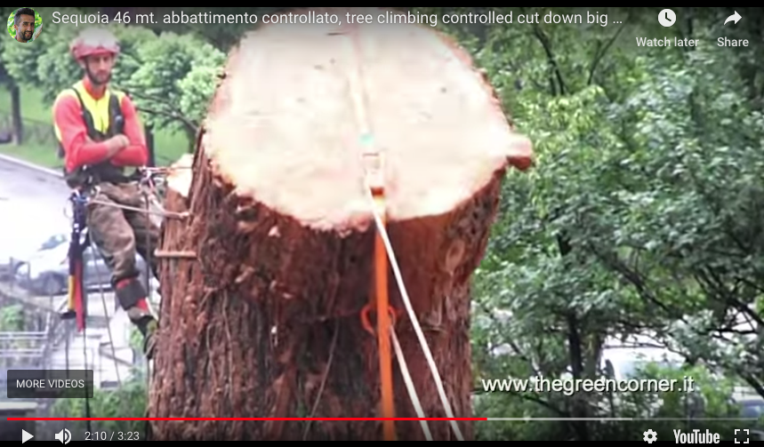 150 ft Redwood Removal - Italy