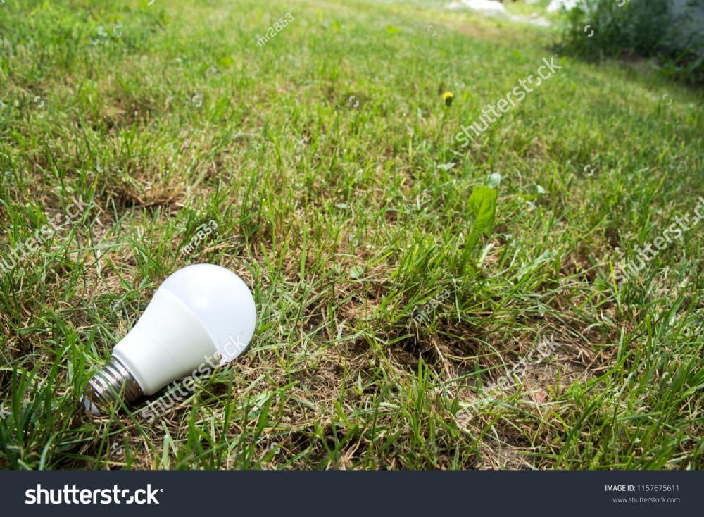 stock-photo-ecological-white-light-bulbs-on-the-grass-1157675611.jpg