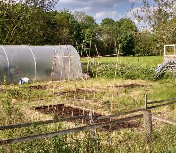 Spring Lane Allotment - Jo & Brenda's plot
